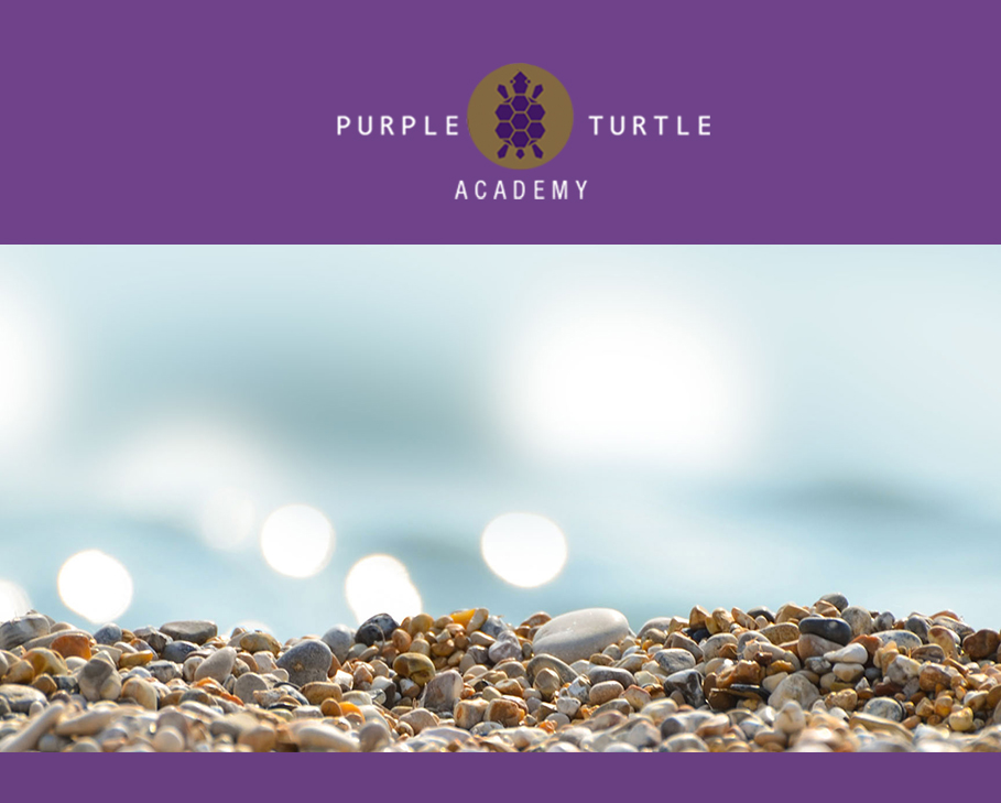 case study purple turtle
